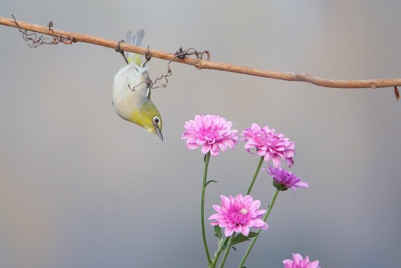 Vogel en bloem royalty-vrije stock afbeelding