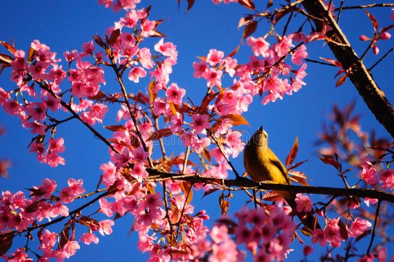Vogel en bloesem stock afbeelding