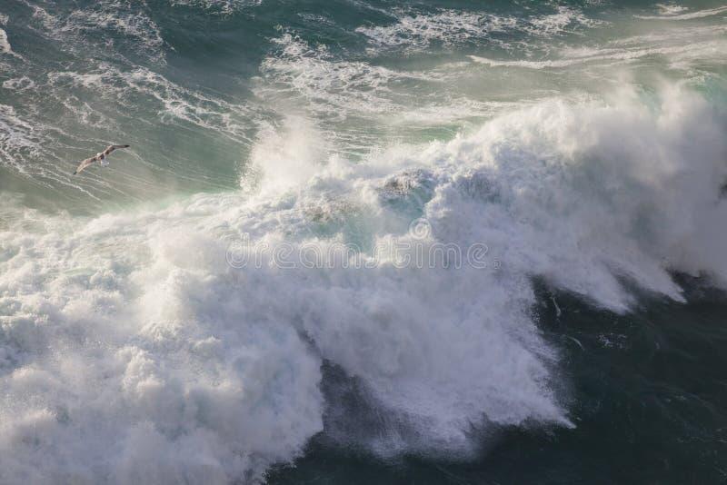 Vogel en Machtige Golven van de Atlantische Oceaan, Ponta DE Sagres, Portugal royalty-vrije stock fotografie