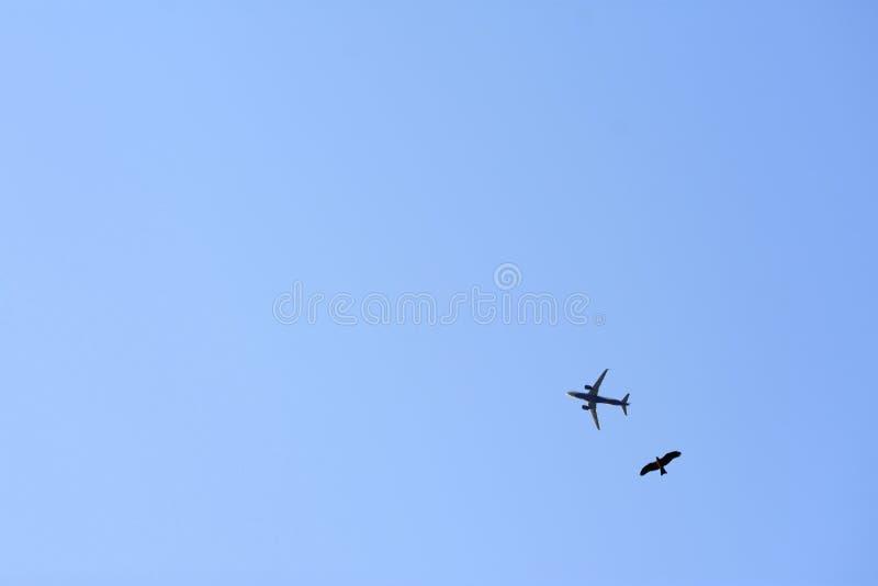 Vogel en Vliegtuigen die in hemel dicht bij elkaar vliegen royalty-vrije stock foto's