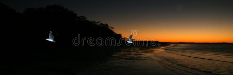 Vogel en Zonsondergang - Fraser Eiland, Unesco, Australië stock foto