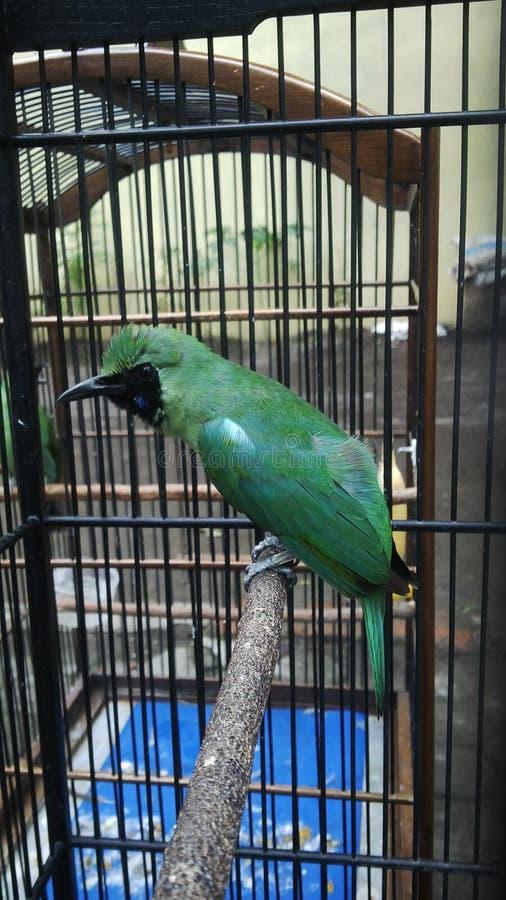 Vogel exotisch lizenzfreie stockfotos