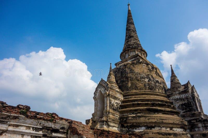 Vogel fliegt über Thailand-Tempel-Ruinen lizenzfreies stockbild