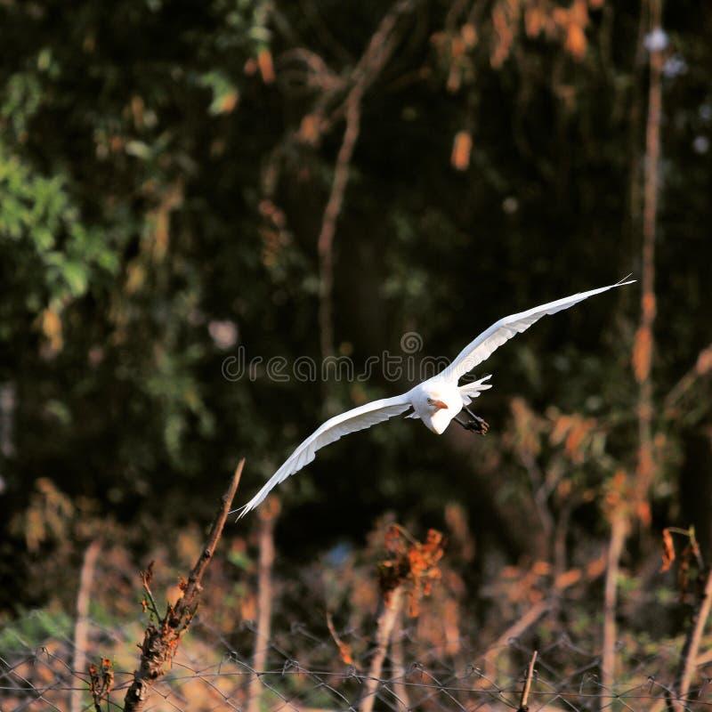 Vogel-Flugmodus stockbild