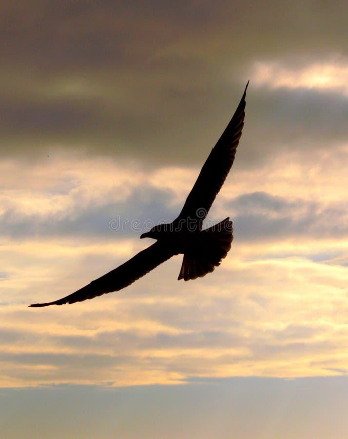 Vogel-Flugwesen stockfotografie
