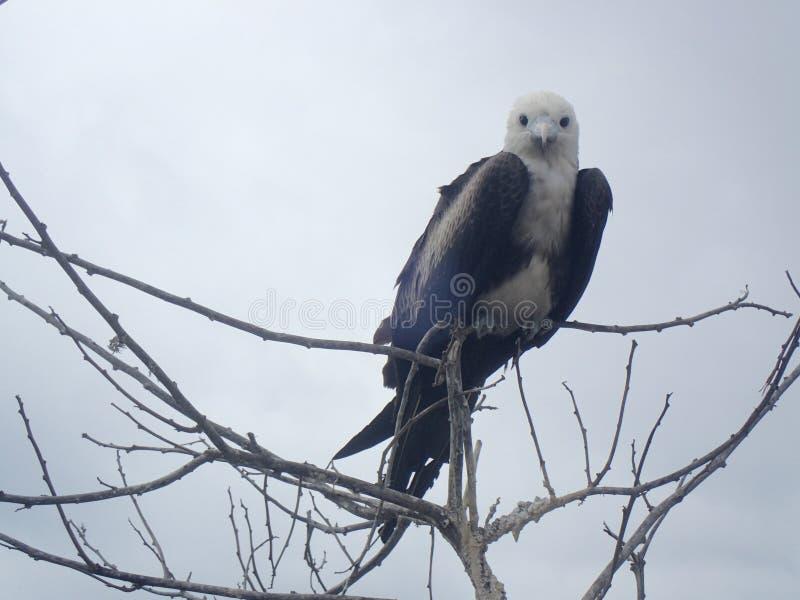 Vogel gehockt stockfotografie
