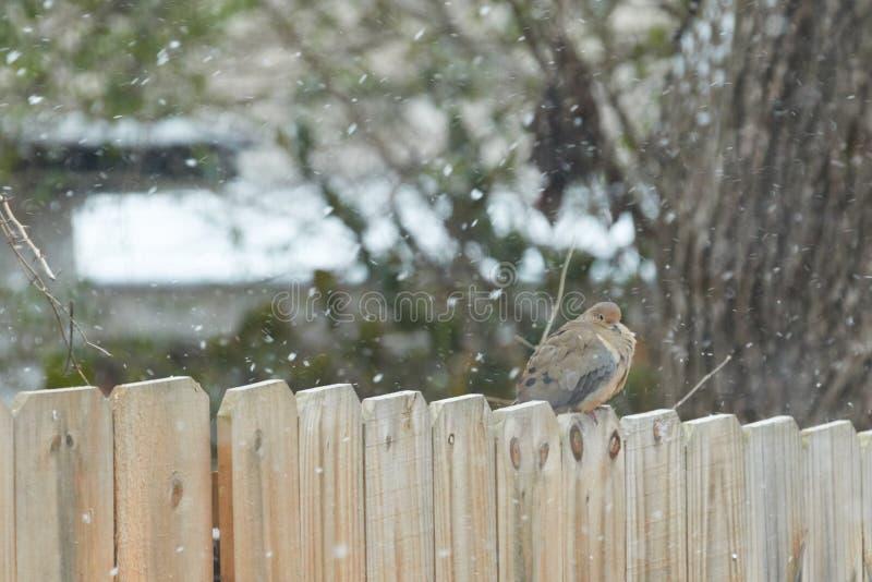 Vogel gehockt auf Zaun im Schnee stockfotos