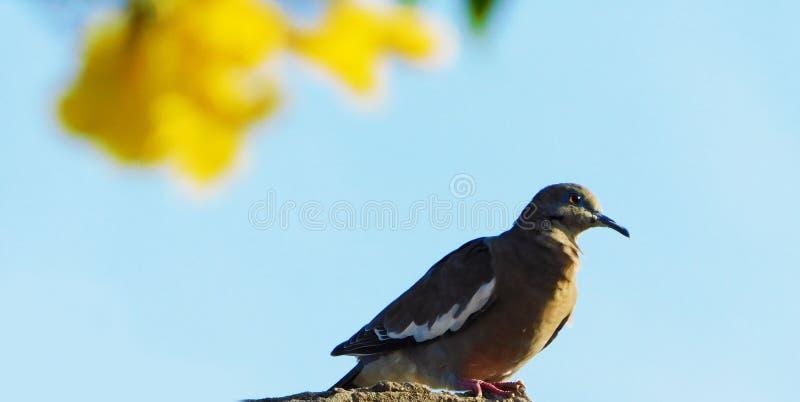 Vogel gelijkend op een kleine duif die zich op een boom in het zonlicht bevinden royalty-vrije stock foto's