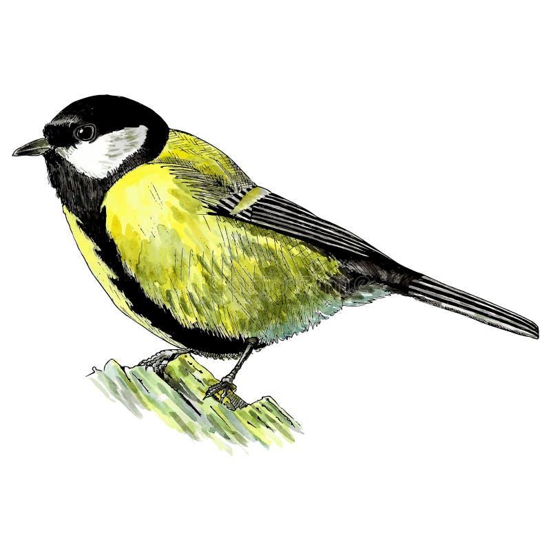 vogel gemalt im aquarell die welt von v geln vektor abbildung illustration von aktivit t tier. Black Bedroom Furniture Sets. Home Design Ideas