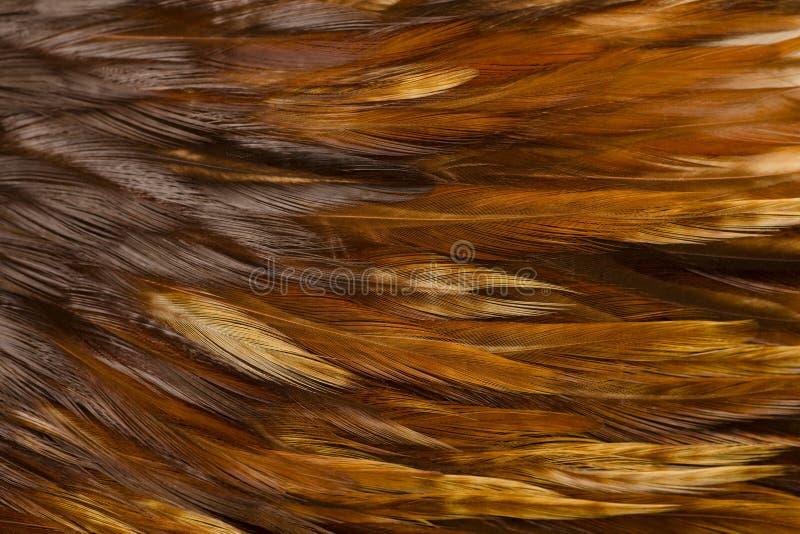 Vogel - Hahn-Federn stockfotografie