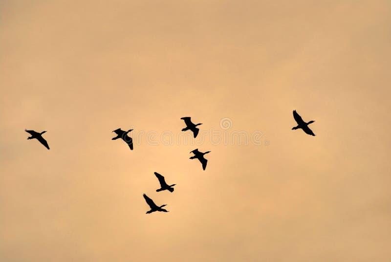 Vogel het vliegen stock afbeeldingen