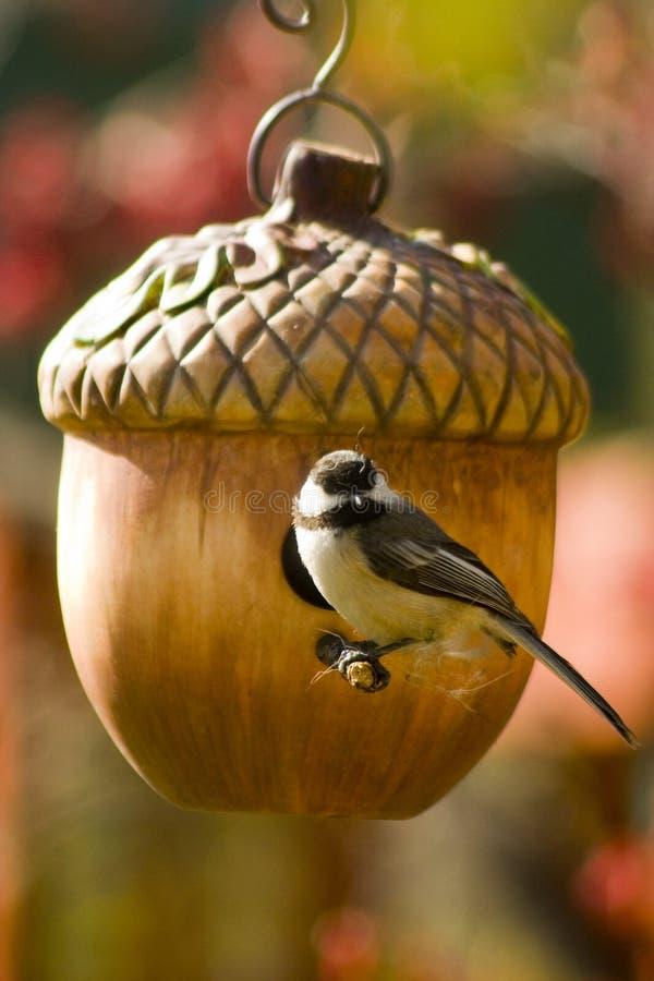 Vogel an ihrem Nest lizenzfreie stockfotos