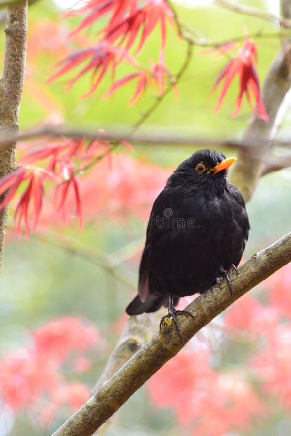 Vogel im Busch stockbild