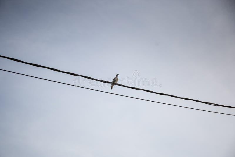 Vogel im Draht stockbild