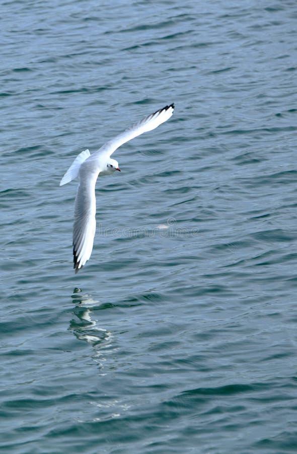 Vogel im Himmel stockfotografie