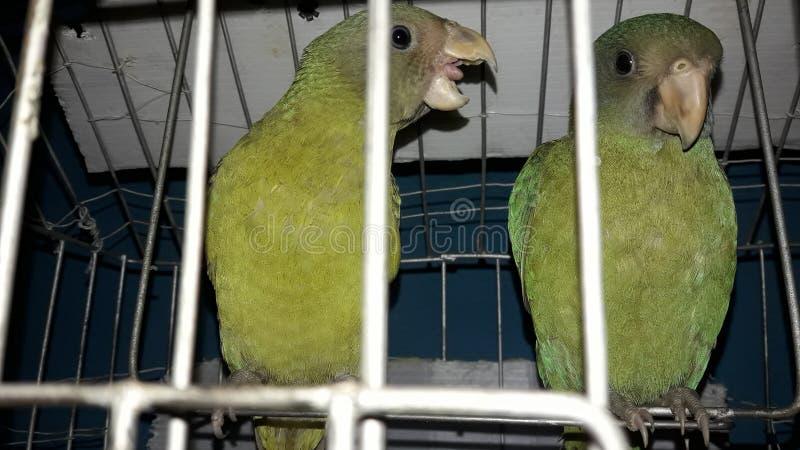 Vogel im Käfig stockbild