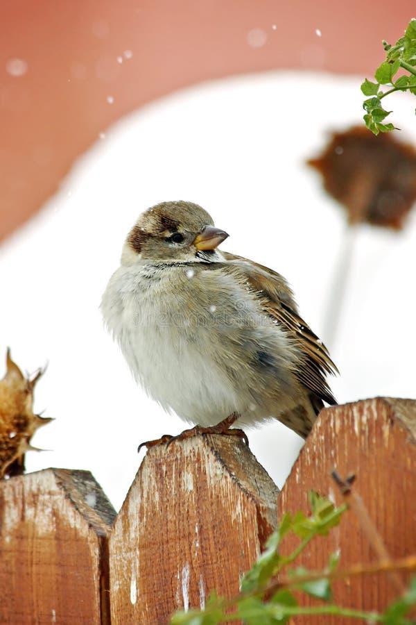 Vogel im Schnee lizenzfreies stockbild