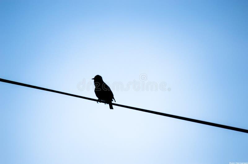 Vogel im Schwarzen lizenzfreie stockfotos