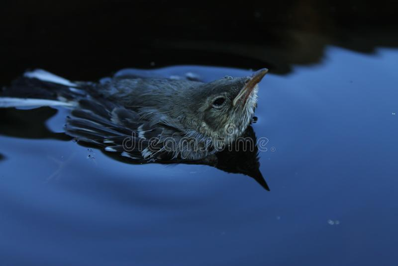 Vogel im Wasser stockfoto