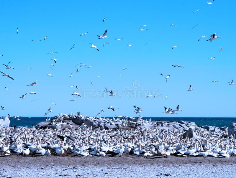 Vogel-Insel stockbild