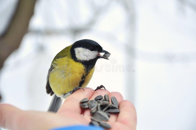 Vogel isst stockfotografie