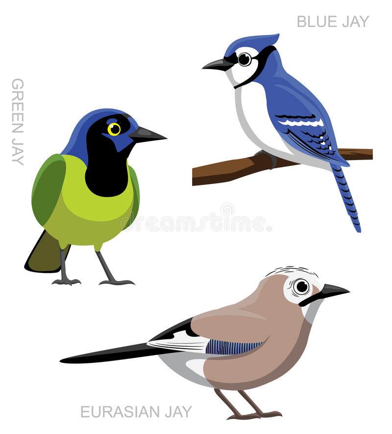 Vogel Jay Set Cartoon Vector Illustration vektor abbildung
