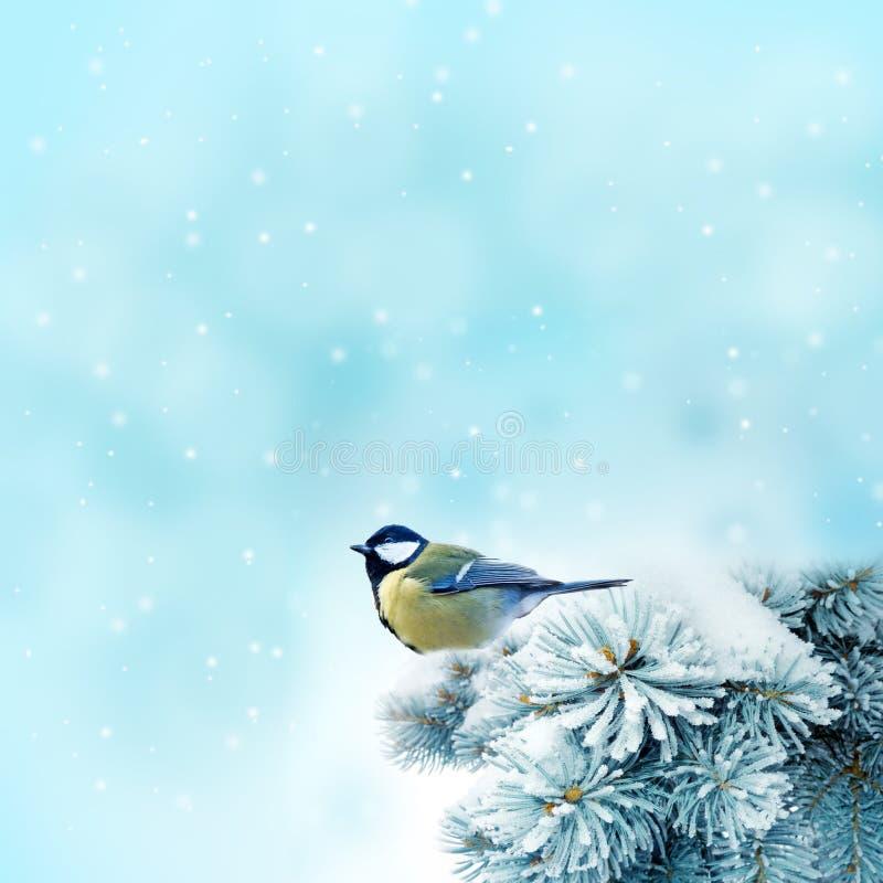 Vogel (koolmees) in wintertijd royalty-vrije stock foto's