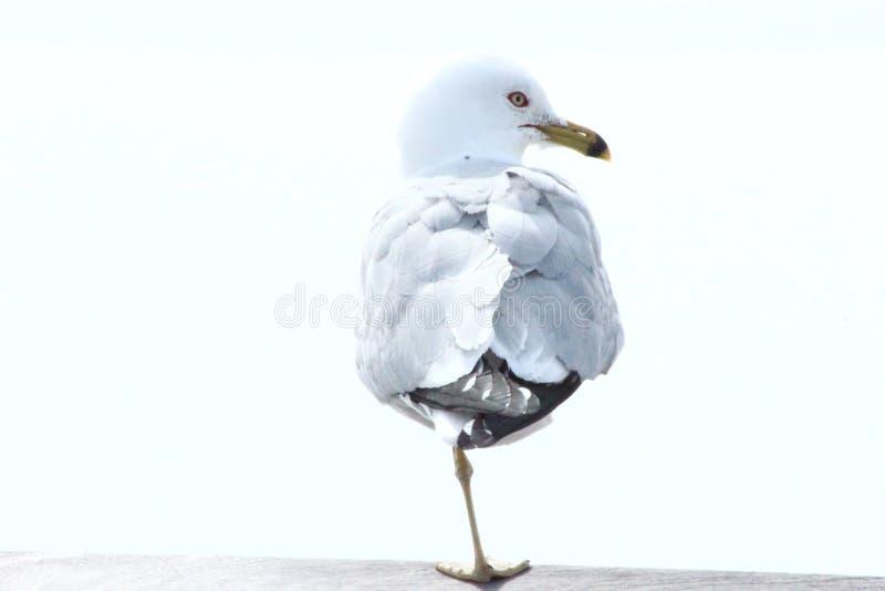 Vogel met één voet stock foto's