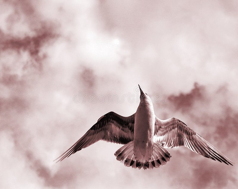 Vogel met open vleugels royalty-vrije stock foto