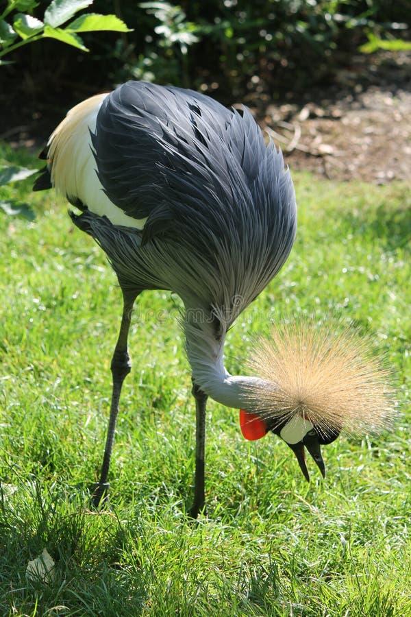 Vogel mit Spitzen im Zoo lizenzfreie stockbilder