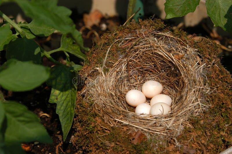 Vogel-Nest stockfoto