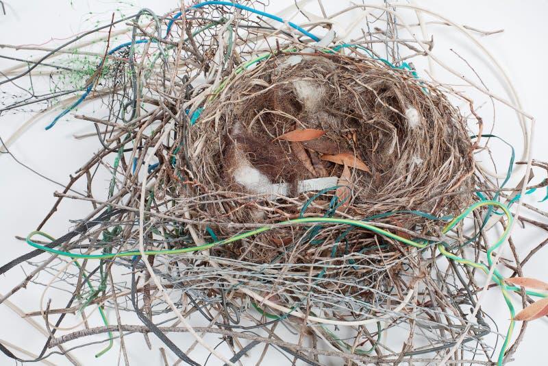 vogel nest stockfoto bild 25727720. Black Bedroom Furniture Sets. Home Design Ideas