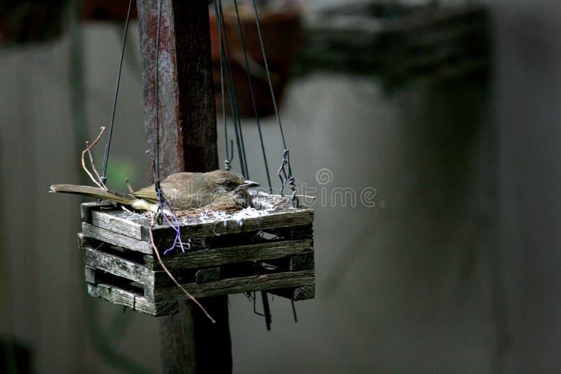 Vogel in nest royalty-vrije stock foto's