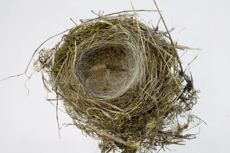 Vogel-Nest auf weißem Hintergrund stockbilder