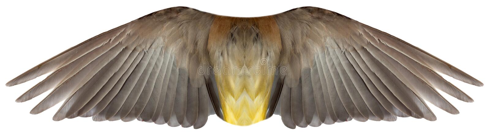 Vogel oder Angel Feather Wings Isolated stockfoto