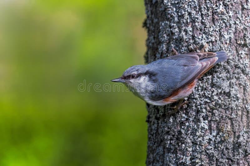 Vogel op Boom stock foto