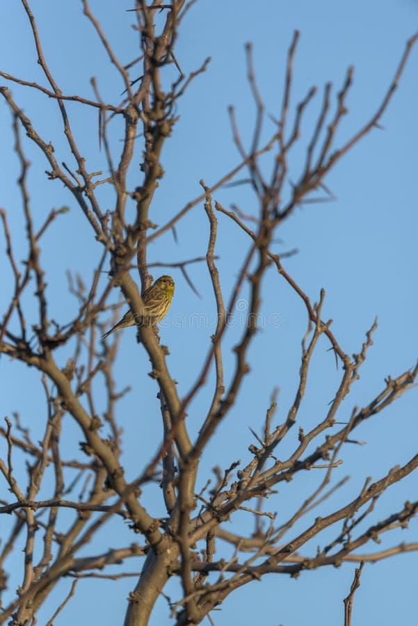 Vogel op boom 3 stock afbeeldingen
