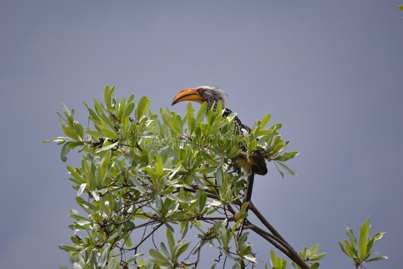 Vogel op boombovenkant stock foto