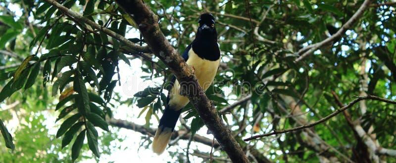 Vogel op de boom stock fotografie
