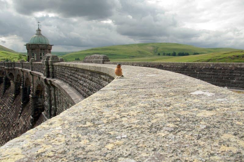 Vogel op de dam stock foto's