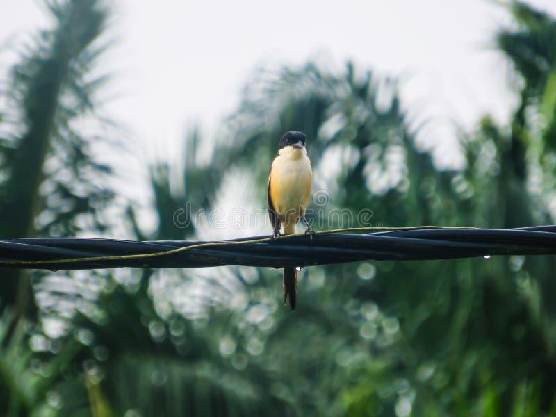 Vogel op de kabel stock afbeeldingen