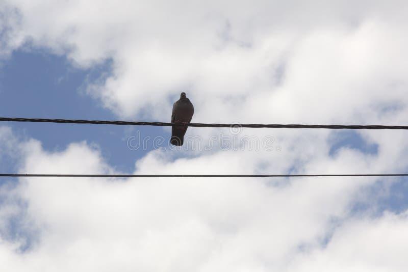 Vogel op de telefoondraad royalty-vrije stock afbeeldingen