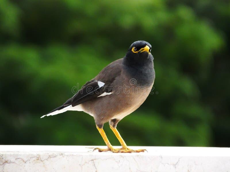 Vogel op de vensterbank stock afbeelding
