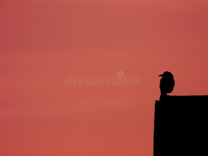 Vogel op een dak stock foto
