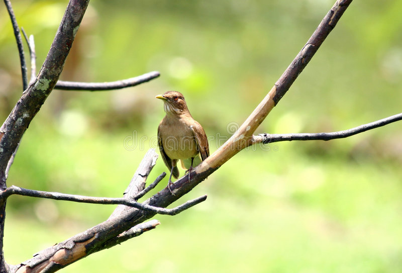Vogel op een lidmaat stock foto's