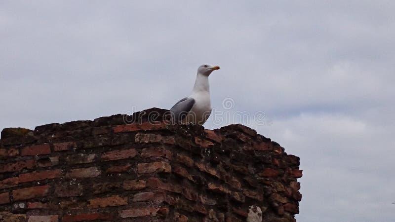vogel op een steendak stock afbeeldingen