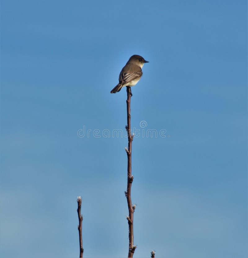 Vogel op een tak stock foto