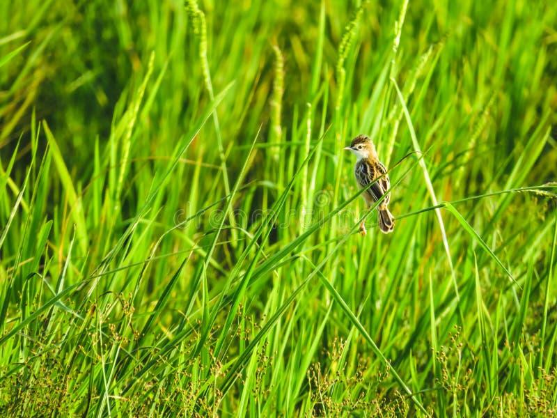 Vogel op het gras stock foto
