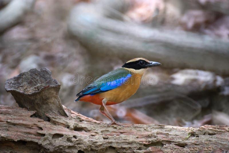 Vogel op staat stock afbeeldingen