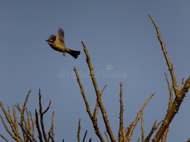 Vogel op tak stock afbeeldingen